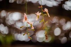 Blumenrosa Stockfoto