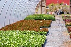Blumensämlinge im Gewächshaus Lizenzfreie Stockfotos