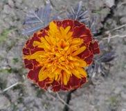 Blumenschönheit stockfotografie