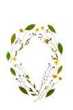 Blumenschönheit Lizenzfreie Stockbilder