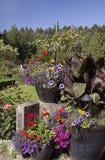 Blumenschönheit an den Butchart-Gärten Lizenzfreie Stockbilder