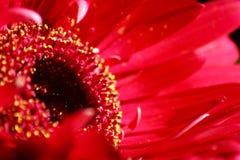 Blumenschönheit im Rosa lizenzfreie stockfotos