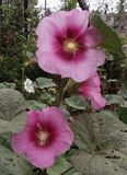 Blumensch?nheit lizenzfreie stockfotos