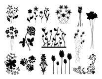 Blumenschattenbilder eingestellt Stockfoto