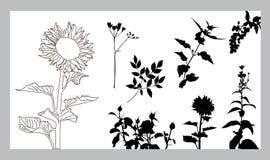Blumenschattenbilder eingestellt Stockbild
