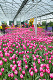 Blumenschau Lizenzfreie Stockbilder