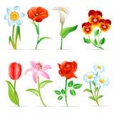 Blumenset Lizenzfreie Stockfotos