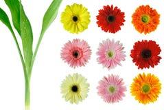 Blumenset Lizenzfreie Stockfotografie