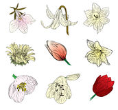 Blumenskizzeansammlung Stockbild