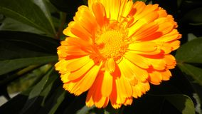 Blumensommer Stockbild