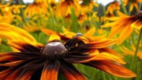 Blumensommer Stockfotografie