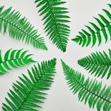 Blumensommer-Mode Fern Tropical Leaf minimal lizenzfreies stockfoto