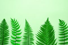 Blumensommer-Mode Fern Tropical Leaf minimal stockfotos