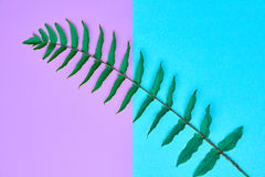 Blumensommer-Mode Fern Tropical Leaf minimal Stockbild