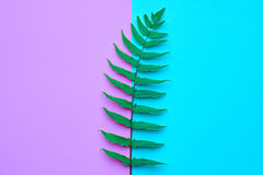 Blumensommer-Mode Fern Tropical Leaf minimal stockfoto