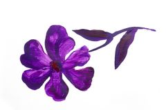 Blumensommerdesign mit handgemalter Zusammenfassung blüht purpurrote Farben auf weißem Hintergrund Lizenzfreies Stockfoto