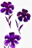 Blumensommerdesign mit handgemalter Zusammenfassung blüht purpurrote Farben auf weißem Hintergrund Stockfotografie