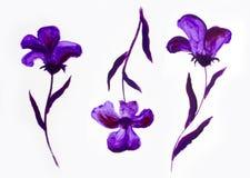Blumensommerdesign mit handgemalter Zusammenfassung blüht purpurrote Farben auf weißem Hintergrund Stockbilder
