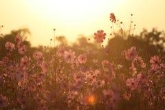 Blumensonnenuntergang im Garten lizenzfreie stockbilder