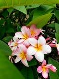 Blumenspaß stockbild