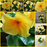 Blumenspielzeug Lizenzfreie Stockbilder