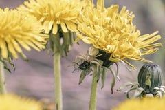 Blumenspinne Stockfoto