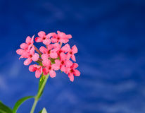 Blumenspitze Stockbild