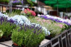 Blumenstall stockbild