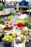 Blumenstall Stockfotografie