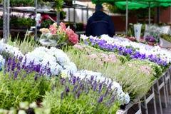 Blumenstall Lizenzfreies Stockfoto