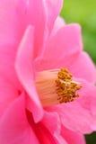Blumenstaubgefäß lizenzfreies stockbild