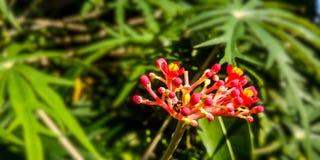 Blumenstiel betadin stockfotografie