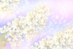 Blumensträuße der Flieder Lizenzfreie Stockfotos
