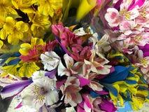 Blumensträuße von Alstroemerias Lizenzfreie Stockbilder