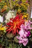Blumensträuße von Blumen und von Kräutern Stockfoto