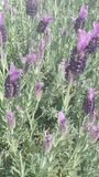 Blumensträuche Stockfoto