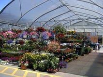 Blumenströmungsabriß am geöffneten Sommermarkt. Stockbild