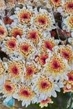 Blumenstrauß Stockfotos