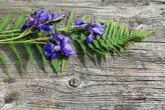 Blumenstrauß auf einem Holz, Iris Stockfotos