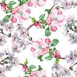 Blumenstrauß blüht Apfel mit Blumenkirschnahtlosem Muster Stockfotografie