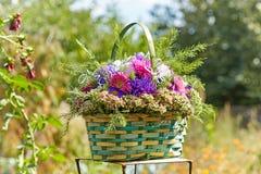 Blumenstrauß der Astern Stockfoto