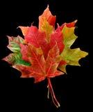 Blumenstrauß der Blätter Stockbilder