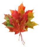 Blumenstrauß der Blätter Lizenzfreie Stockfotografie