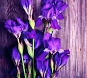 Blumenstrauß der blauen blühenden Iris Lizenzfreie Stockbilder