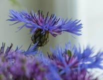 Blumenstrauß der blauen Blumen Eine Blume steht heraus vom Bündel Stockfoto