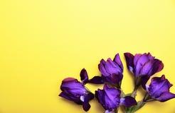Blumenstrauß der blauen Iris auf einem gelben Hintergrund Lizenzfreie Stockfotografie