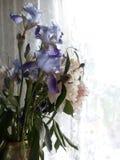 Blumenstrauß der blauen Iris und der weißen Pfingstrosen vor dem hintergrund des Morgenfensters Stockfoto