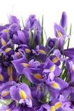 Blumenstrauß der Blenden Stockfoto