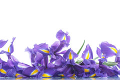 Blumenstrauß der Blenden Stockfotografie