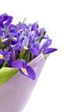 Blumenstrauß der Blenden Stockfotos